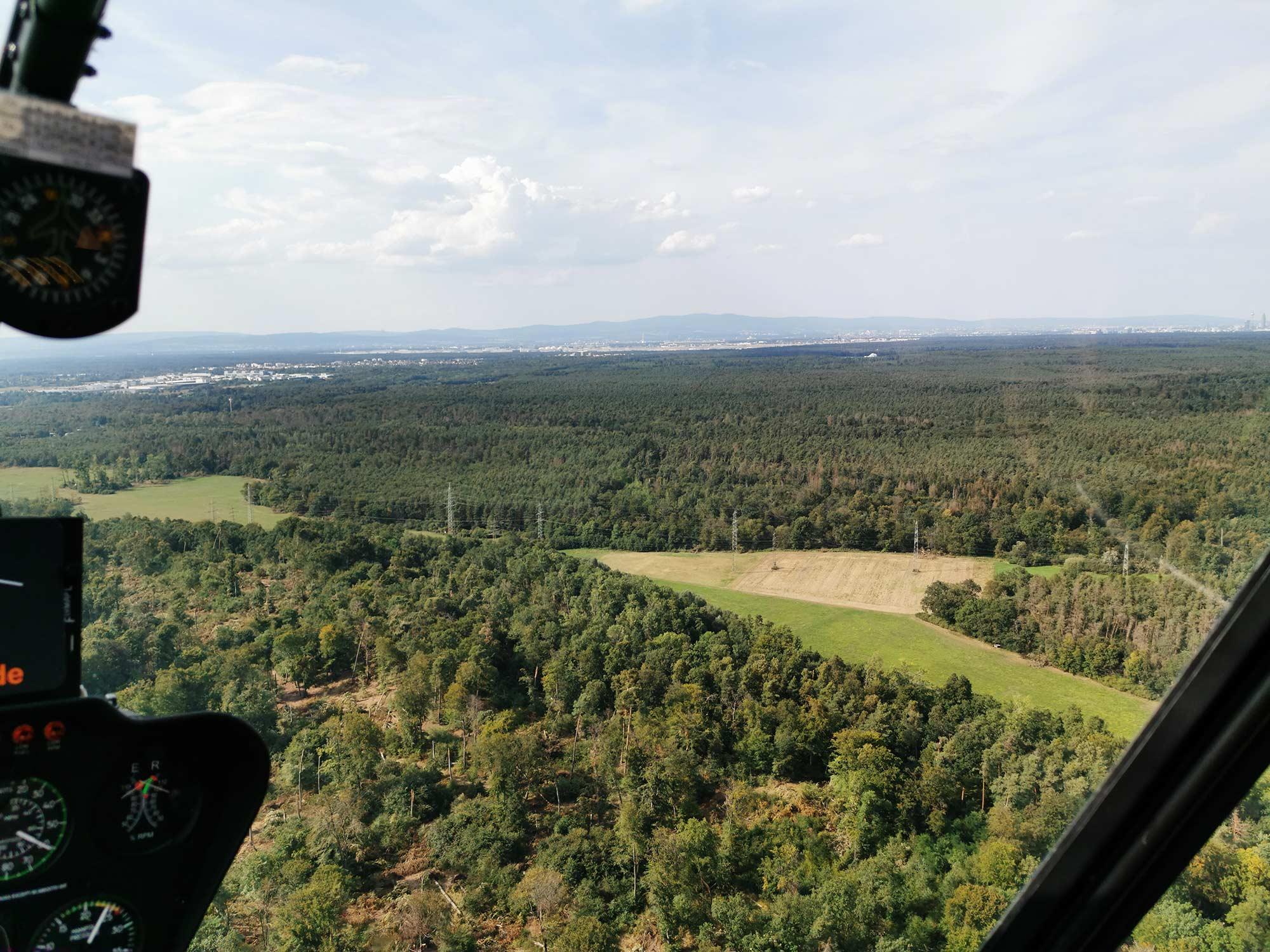 Frankfurt greenbelt - trees - forest - nature - RheinMain - aerial tour